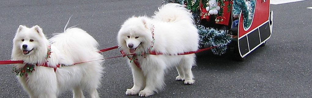 Breeders | Samoyed Club of Victoria